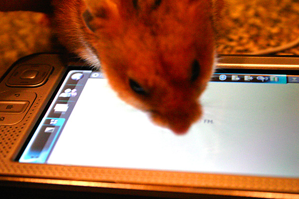 A Nokia N800 internet tablet -- and a hamster